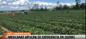 trabajador agricola en canada