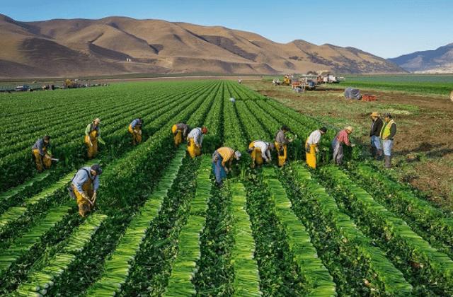 trabajadores mejicanos en el campo